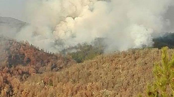 Околу 100 хектари шума изгореа последните три дена во Делчевско