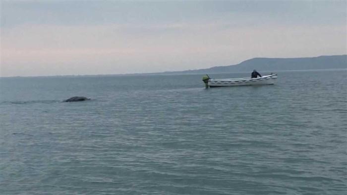 Уживале во мирните води, а потоа со голема брзина им се приближило ова суштество