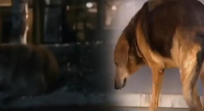 Ова куче 8 години го чекаше сопственикот по неговата смрт, сега запрело и неговото срце