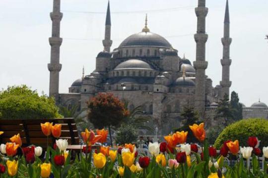 Во Истанбул посаден  килим  од лалиња