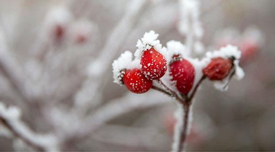 Во Маврово 62 сантиметра снег  најладно во Скопје и Берово