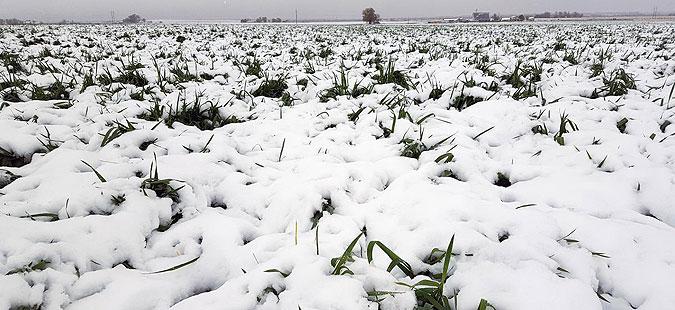 shteti-kaj-ovoshkite-od-niskite-temperaturi-vo-kumanovsko