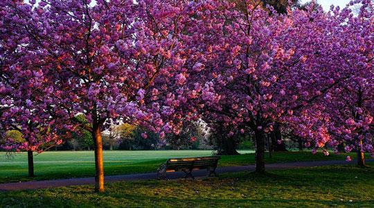 Уживајте во убавото време  прогнозата пролетна