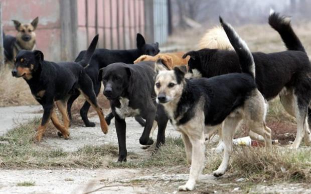 Драма во Охрид  Жена нападната од глутница кучиња