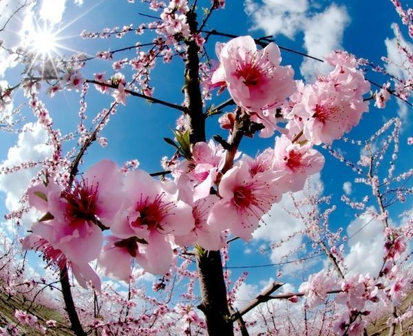 Пролетта ќе започне со убав сончев ден  Еве ја временската за цела недела