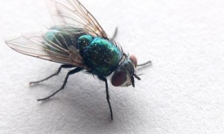Веќе нема да ви влезе мува дома  Со еден трик ќе се спасите од здодевните инсекти