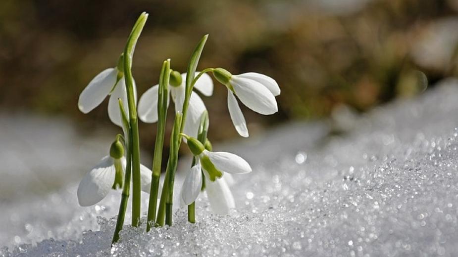 Зима нема да видиме   пролет уште во февруари