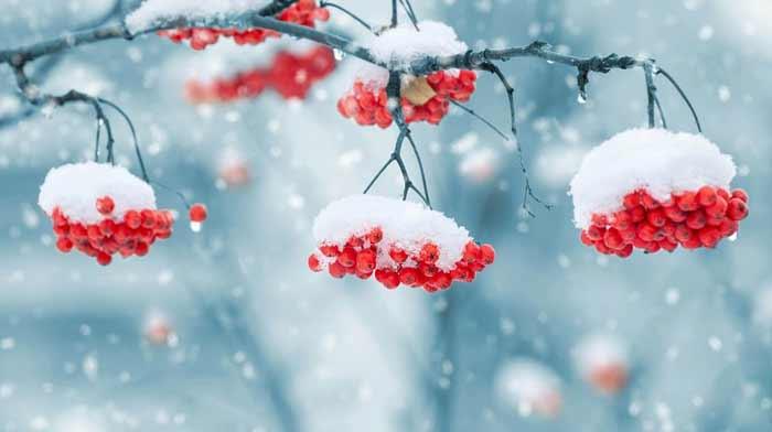 Се враќа снегот  УХМР со лоши вести за времето