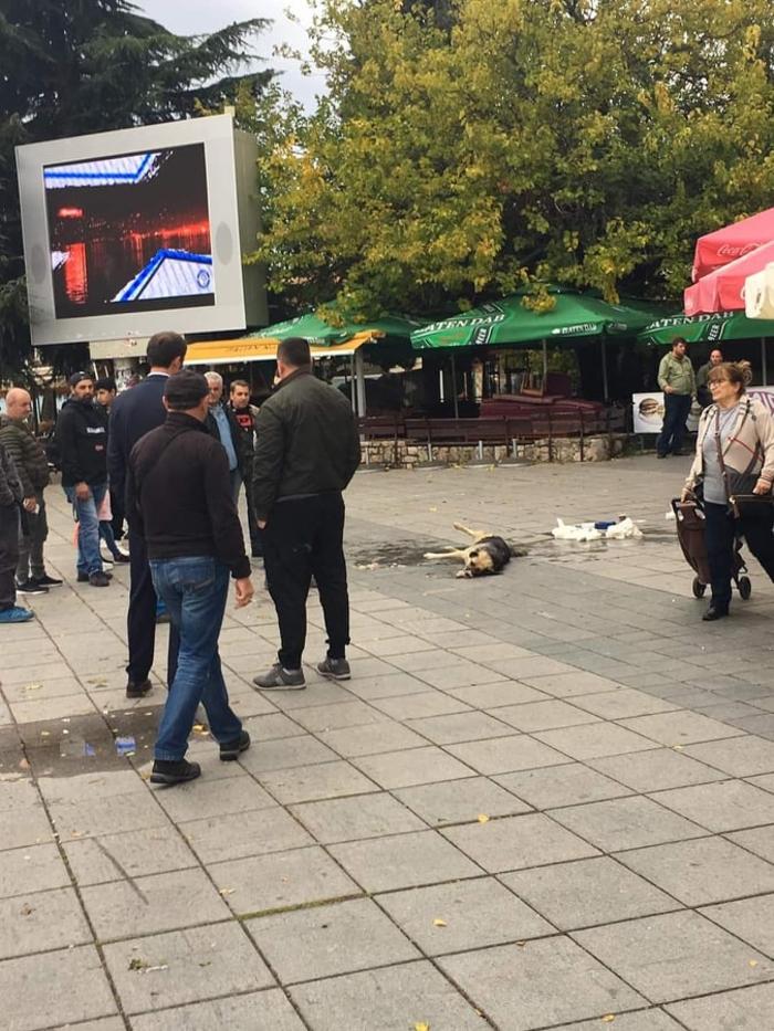 Отруени 10 улични кучиња во центарот на Охрид
